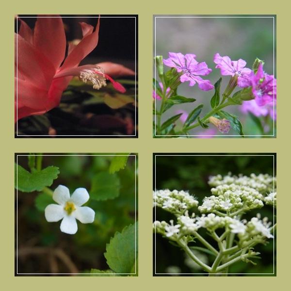 myflower.jpg